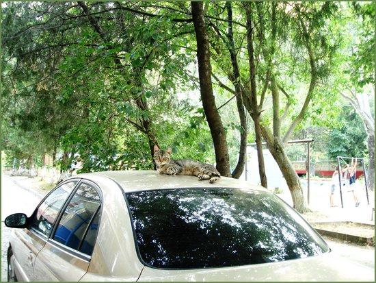 Прокат автомобилей Zebra в Анапе