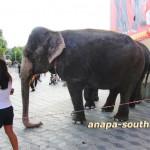 Слон, показывающий номера в «Интерцирке»